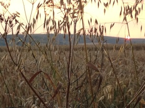 www.overthebarblog.com 120