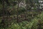 Trees down on the roadside. Guiping, Guangxi.