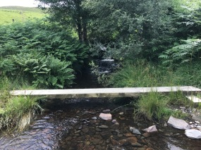 Lovely Stream Crossing